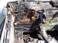 plywood_roof_repair_san_diego